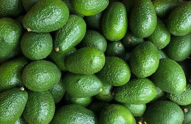 Miglioramento della filiera frutticola nelle province di Imbabura e Carchi
